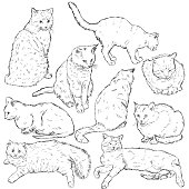 Vector Set of Sketch Cats
