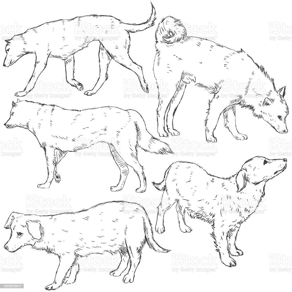 Vector Set of Sketch Dogs vector art illustration
