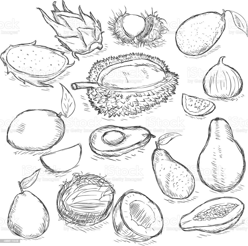 Vector Set of Sketch Exotic Fruits vector art illustration