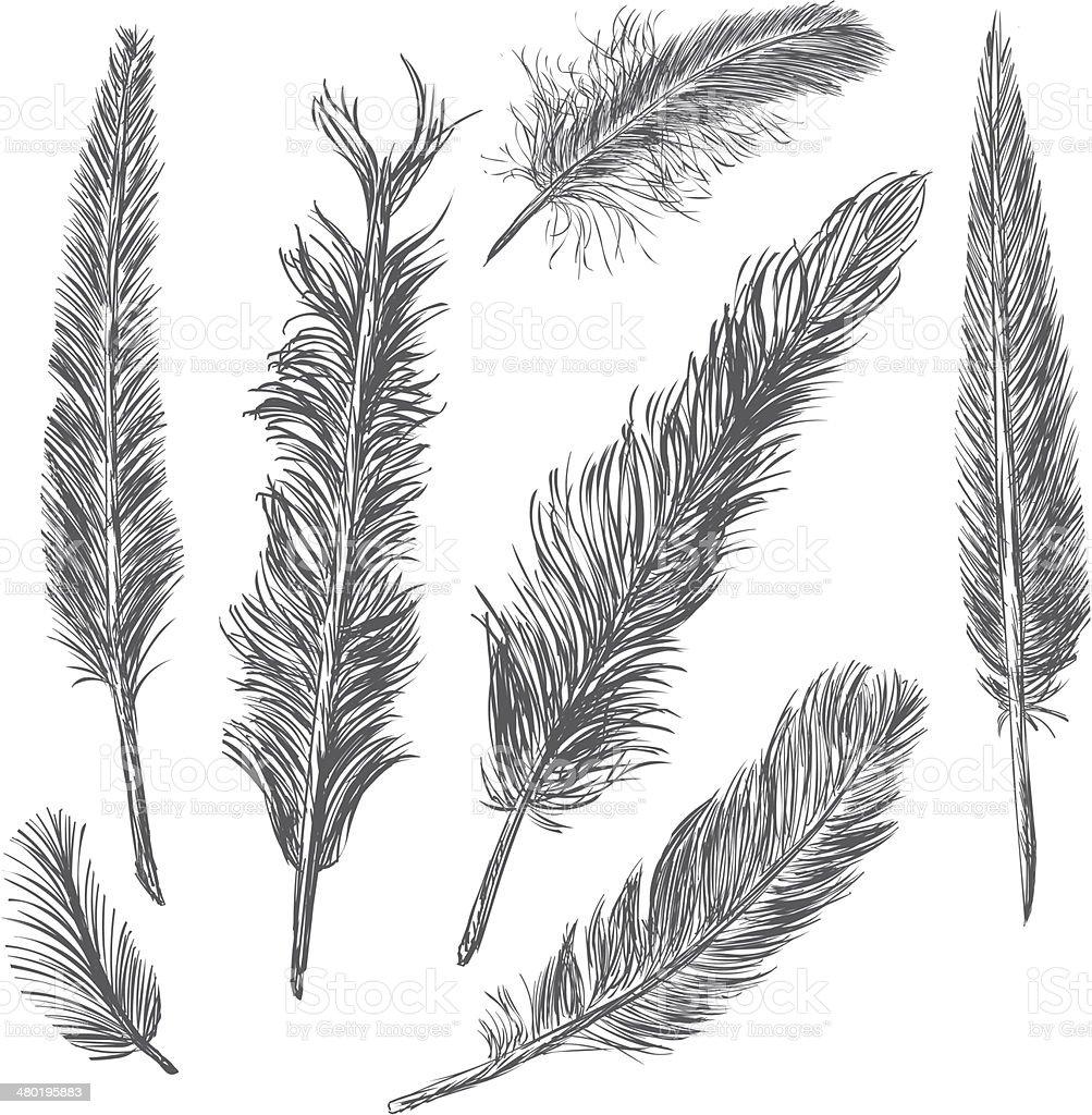 Vector Set of Sketch Plumage vector art illustration