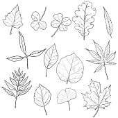 Vector Set of Sketch Tree Leaves. Leaf Types Collection.