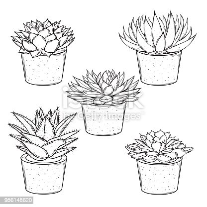 Vector set of sketches house plants succulents in pots on a white background EPS10