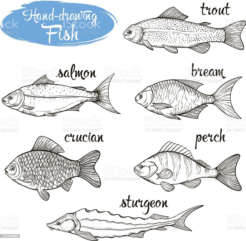 Vector set of sketches of different fishes vector art illustration