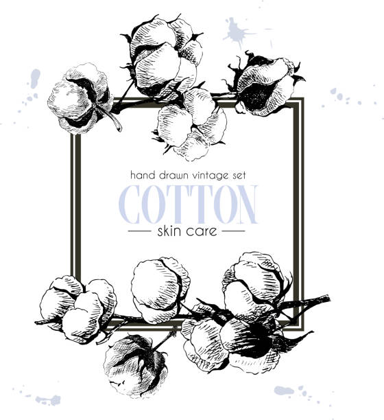 vector set of skin care ingredients. organic hand drawn elements. cotton branch. - cotton stock illustrations, clip art, cartoons, & icons
