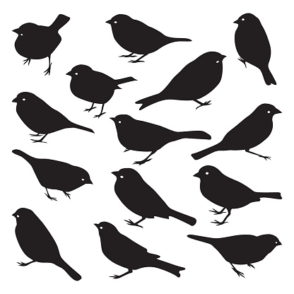 Vector set of sparrow silhouettes.