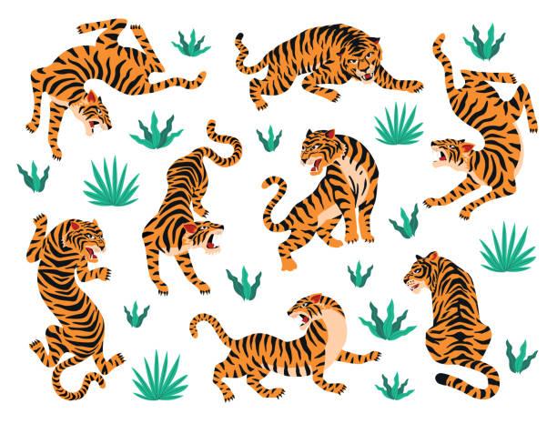 トラと熱帯の葉のベクターセット。トレンディなイラスト。 - 野生動物旅行点のイラスト素材/クリップアート素材/マンガ素材/アイコン素材