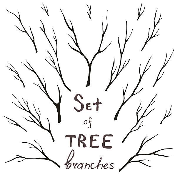 wektor zestaw drzewo gałęzie, bagażnika, gałązka, korzenie - gałązka stock illustrations
