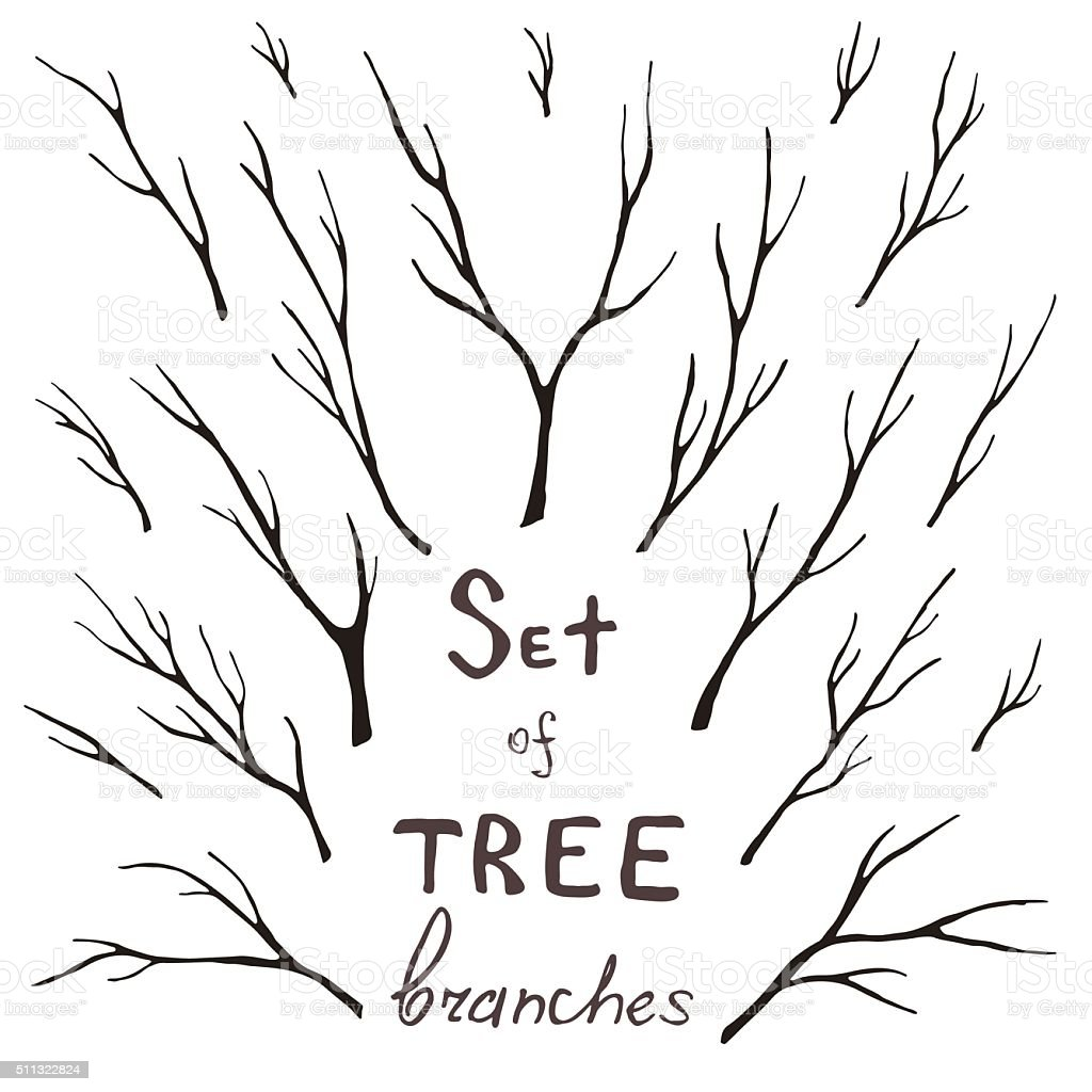 Vector set of tree branches, trunk, twig, stem vector art illustration