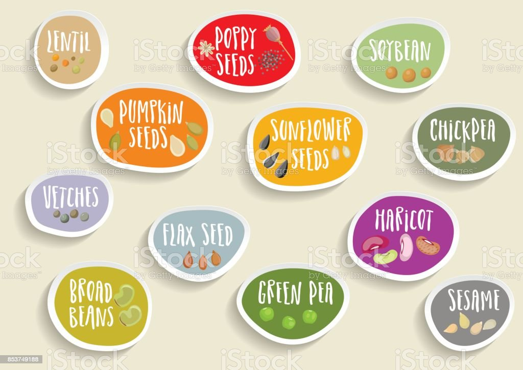 Vector set of trendy colorful paper stickers with beans, seeds and lettering. vector art illustration