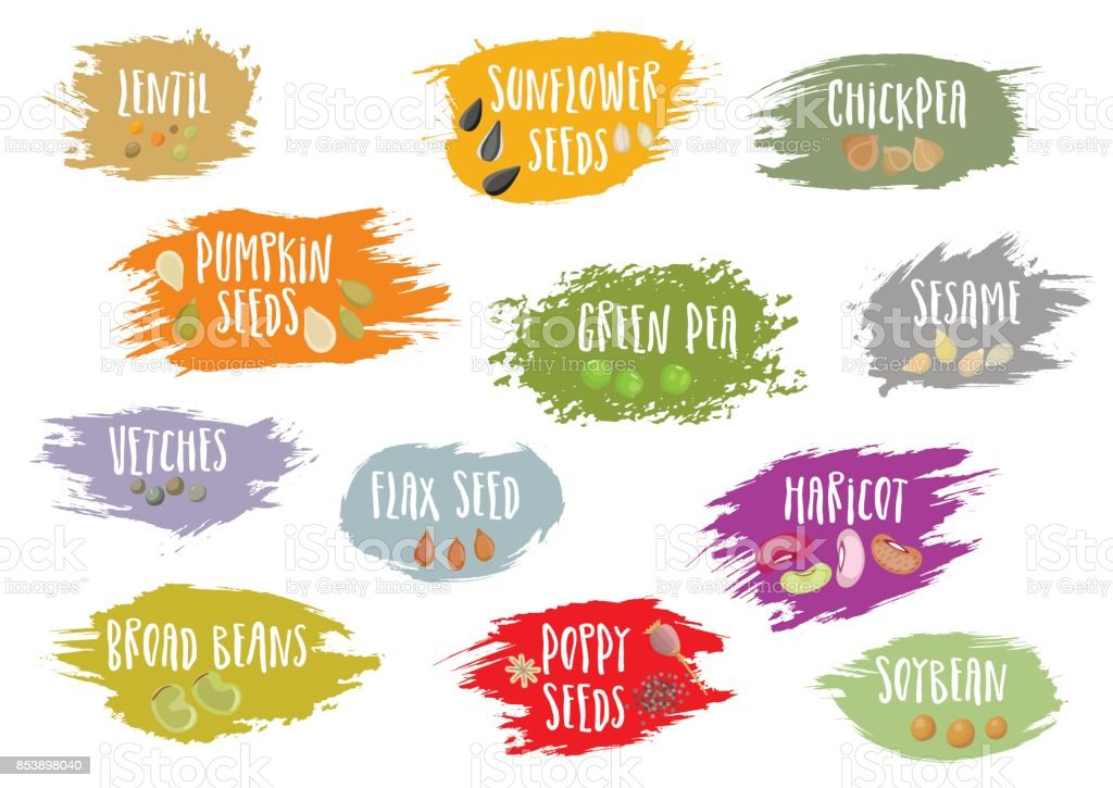Vector set of trendy emblems with beans and seeds and lettering. vector art illustration