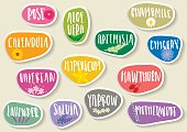 Vector set of trendy paper stickers for medicinal herbs.