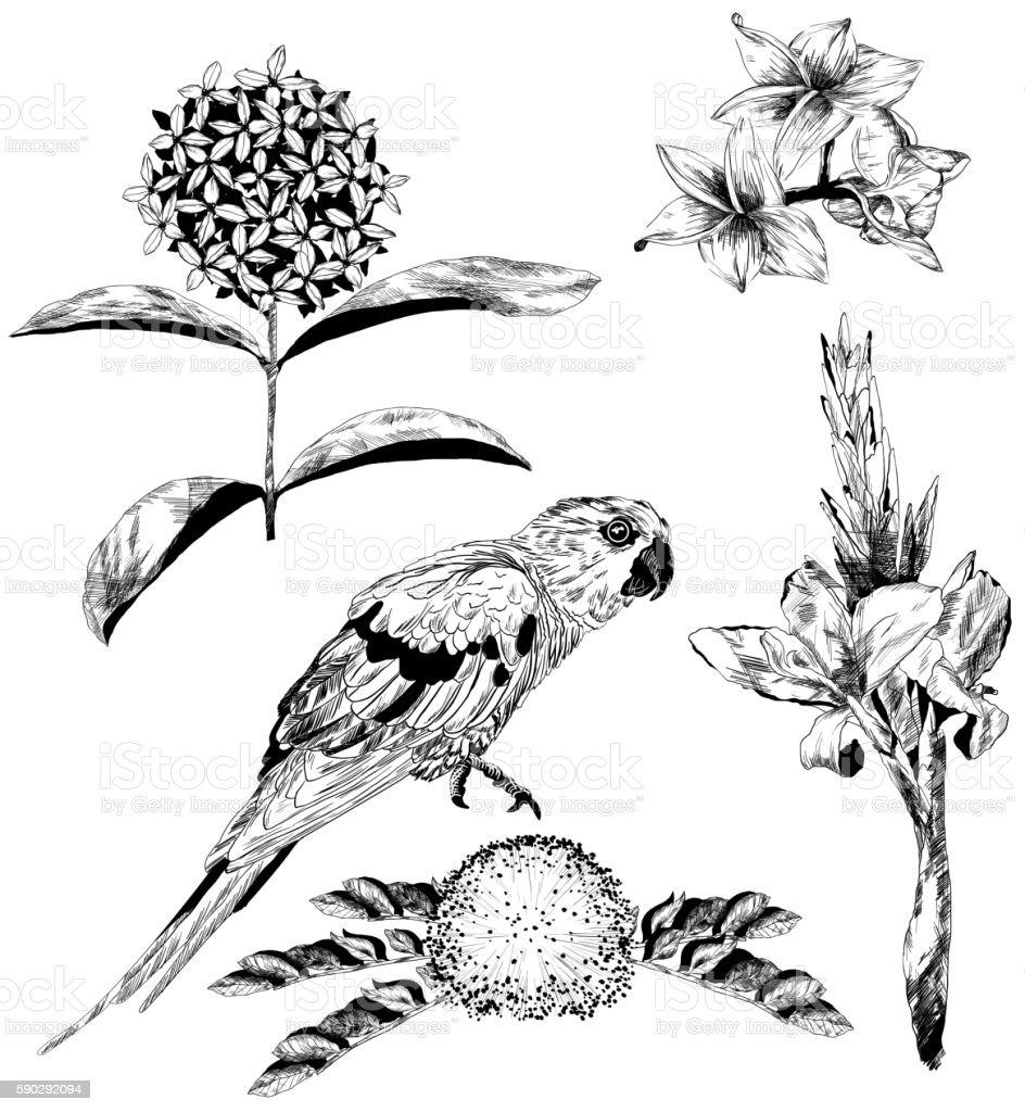 Vector set of tropical flowers and Parrot royaltyfri vector set of tropical flowers and parrot-vektorgrafik och fler bilder på beskrivande färg