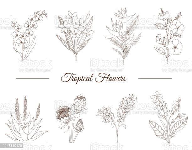Vector set of tropical flowers isolated on white background hand vector id1147810128?b=1&k=6&m=1147810128&s=612x612&h=n29mct20t ak9y1lsqnphvk26oc7q ytorafnxbuoti=