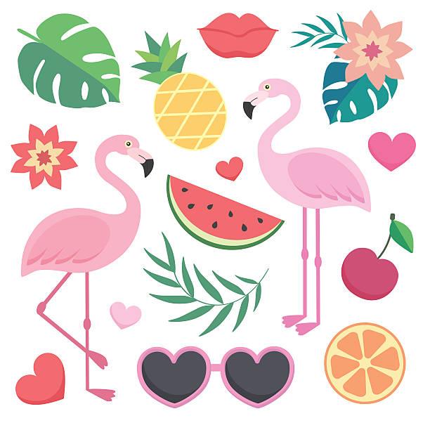 vector set of tropical illustrations. - flamingo stock illustrations