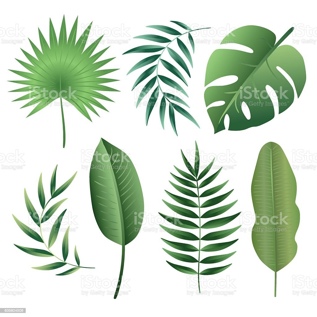 Vector Set Of Tropical Leaves Stock Illustration Download Image Now Istock Choose from 600+ tropical leaves graphic resources and download in the form of png, eps, ai or psd. https www istockphoto com vector vector set of tropical leaves gm635804506 112420145
