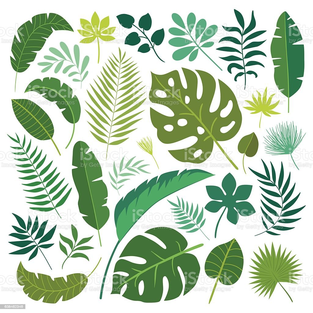 Vector Set Of Tropical Leaves Stock Illustration Download Image Now Istock Seamless tropical floral pattern background. https www istockphoto com vector vector set of tropical leaves gm638462346 114488691
