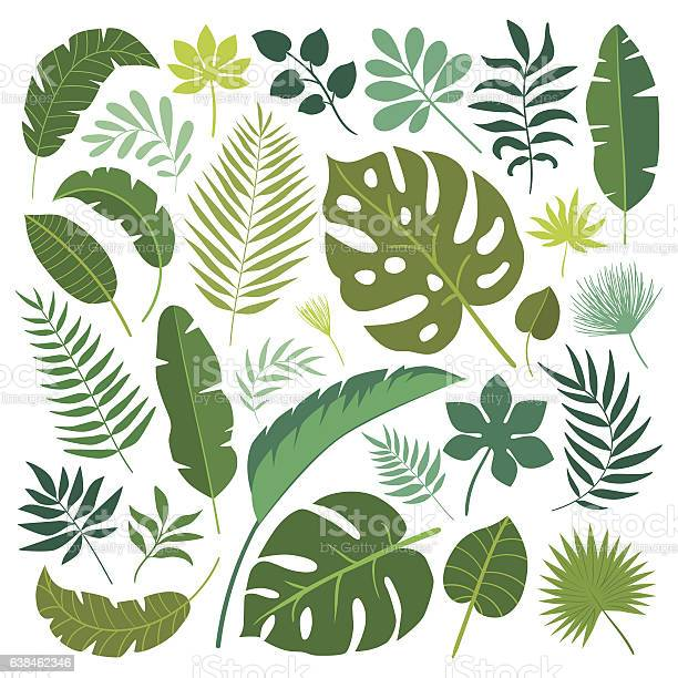 Vector set of tropical leaves vector id638462346?b=1&k=6&m=638462346&s=612x612&h=8kyv3vk7epd3vaajuw1excyisgosfiru8ug7d3glcpi=