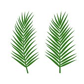 Vector set of tropical palm leaves isolated on white background. Green jungle exotic leaves for summer design, print, beach party poster. Natural floral background. Tropical plant icon.