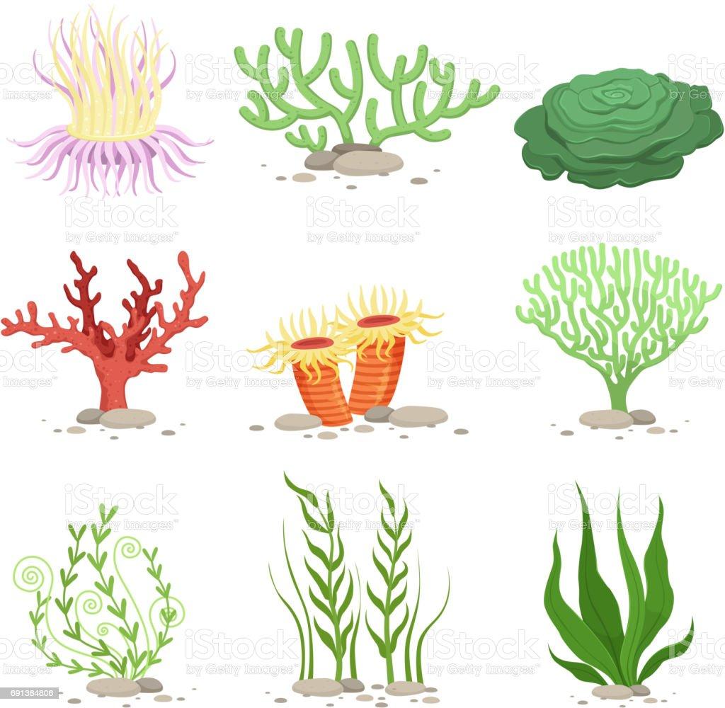 Vector conjunto de plantas subacuáticas. Aislar de divertidas ilustraciones en estilo de dibujos animados sobre blanco - ilustración de arte vectorial