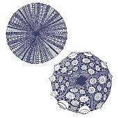vector set of  urchins