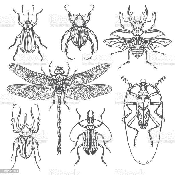 Vector set of various insects in hand drawn style vector id938549914?b=1&k=6&m=938549914&s=612x612&h=fydqiobwcoa2dbb3w6oexwp5ca0d4mwzdoah6wfj6i4=