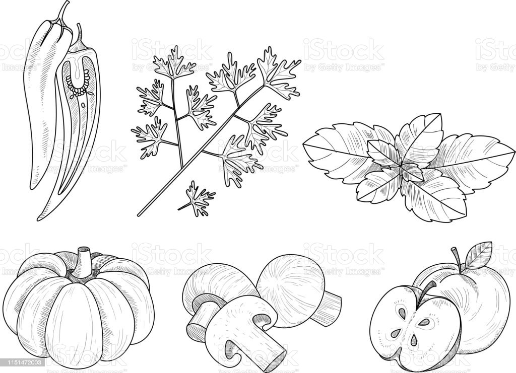 Vector Set Of Vegetables Fruits And Herbs In Sketch Style