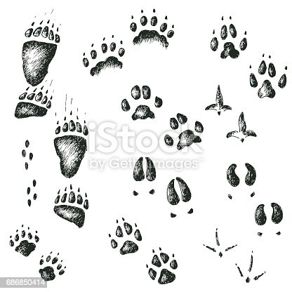 Vector hand drawn set of walking wild wood animal and bird tracks