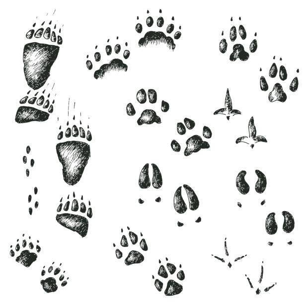 Jeu de marche les titres animaux et oiseaux bois sauvages vectorielles - Illustration vectorielle
