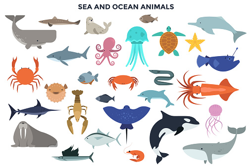 Vector Set of Water and Ocean Animals