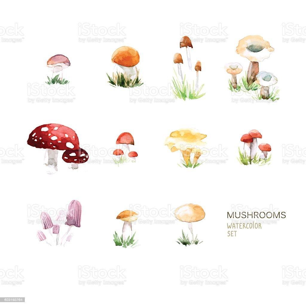 Vector Set Of Watercolor Mushroom Elements On White Background Stock ...