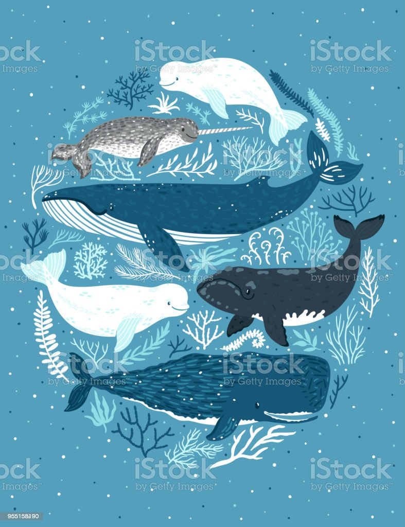 Vector set of whales. Illustration of marine mammals: narwhal, blue whale, beluga whale, white whale and sperm whale. Childish poster with sea animals ans seaweed. vector art illustration