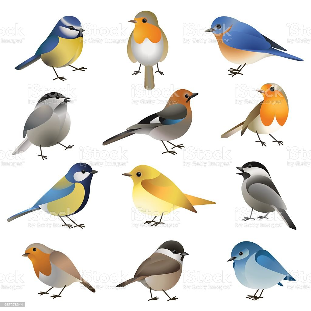 Vector set of wild colorful birds vector art illustration