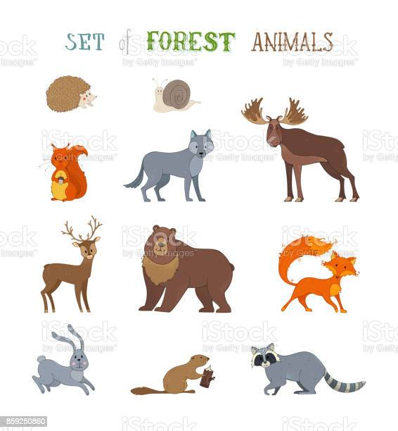 Vector set of wild forest animals made in cartoon style vector id859250860?b=1&k=6&m=859250860&s=612x612&h=egjvs0i3n0tlkisjamu5yho3ehhbczwb4bby llz86i=