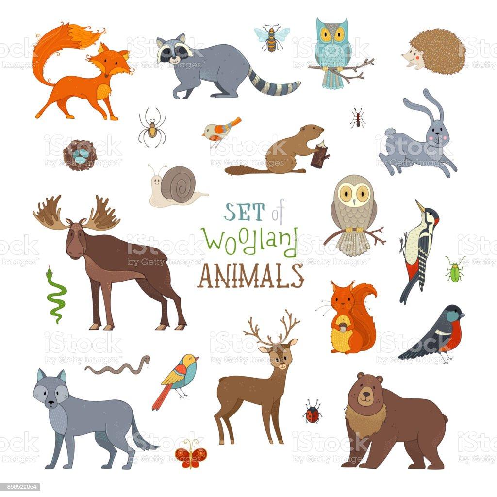 Vector set of woodland animals made in cartoon style. vector art illustration