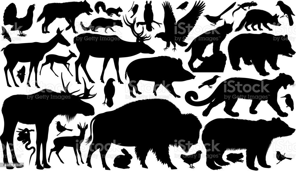 vector set of woodland animals silhouettes - Royalty-free Amphibian stock vector
