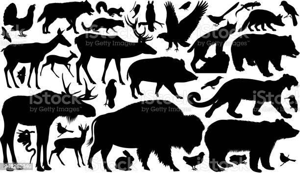 Vector set of woodland animals silhouettes vector id948262346?b=1&k=6&m=948262346&s=612x612&h=okb2pbpuadal5kdmpiyum50ulc4hcmvwmd0kvpufbvi=