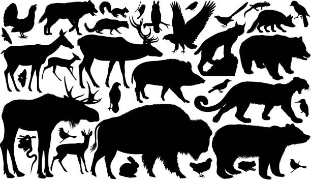 vector set of woodland animals silhouettes - animals stock illustrations