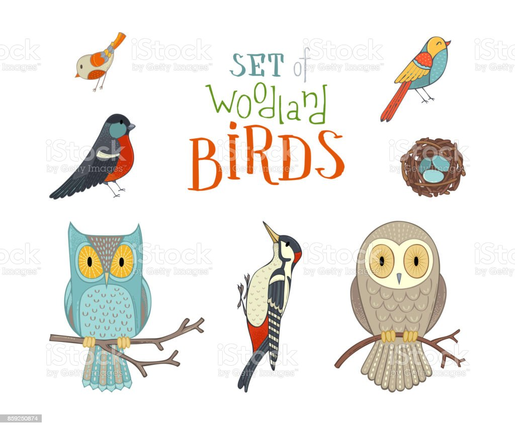 Vector set of woodland birds in cartoon style. vector art illustration