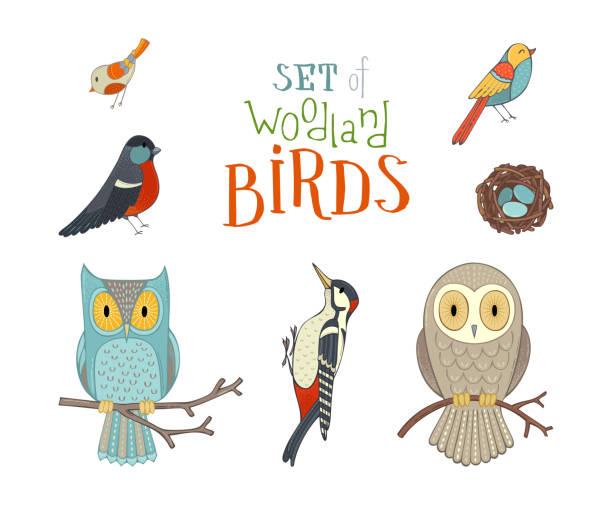stockillustraties, clipart, cartoons en iconen met vector set bos zangvogels cartoon stijl. - vogel herfst