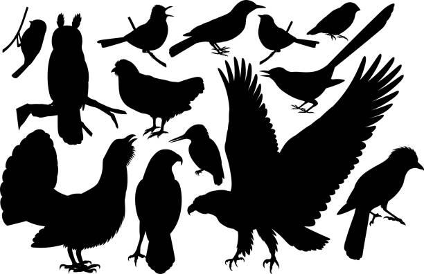 bildbanksillustrationer, clip art samt tecknat material och ikoner med vector uppsättning skogsmark fåglar siluetter - tjäder