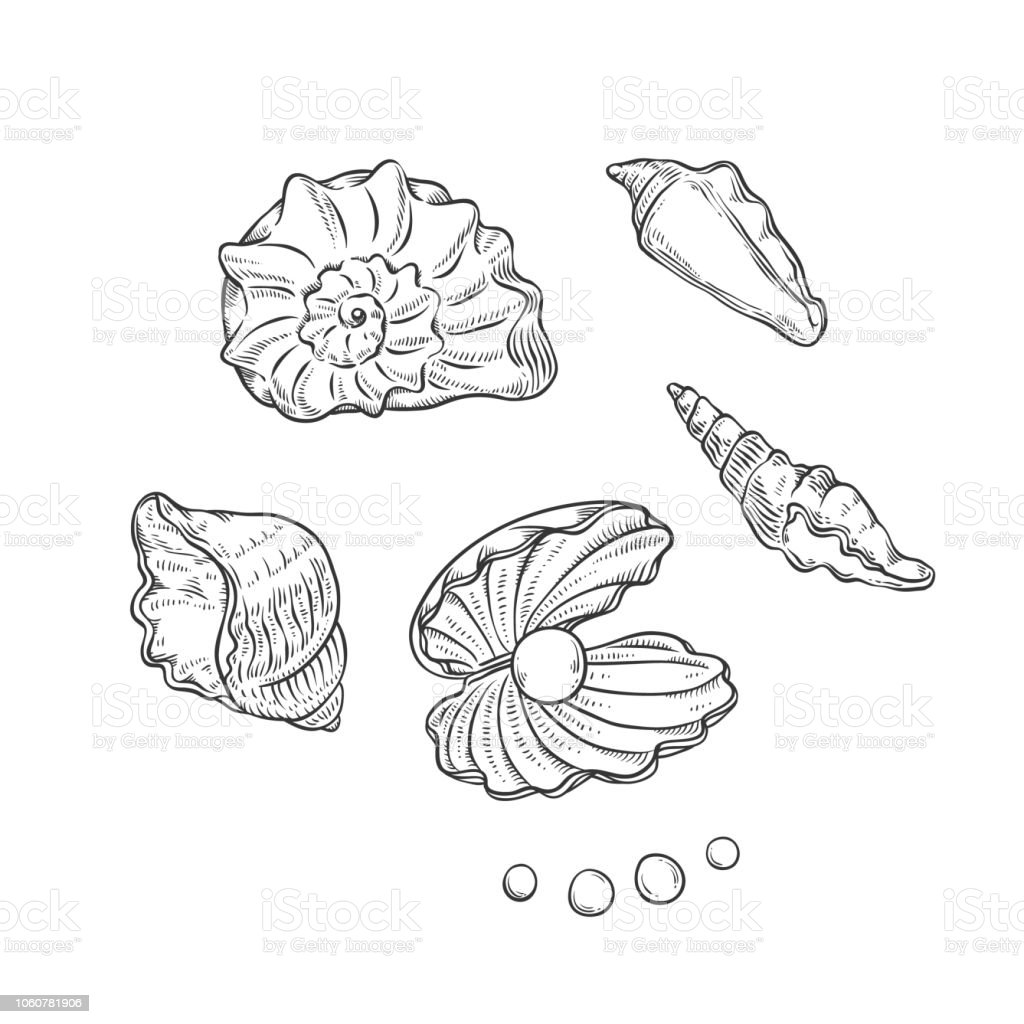 Vector set sea shells and pearls different shapes. Clamshells monochrome black outline sketch illustration isolated on white background for design of tourist cards logos on marine theme. vector art illustration