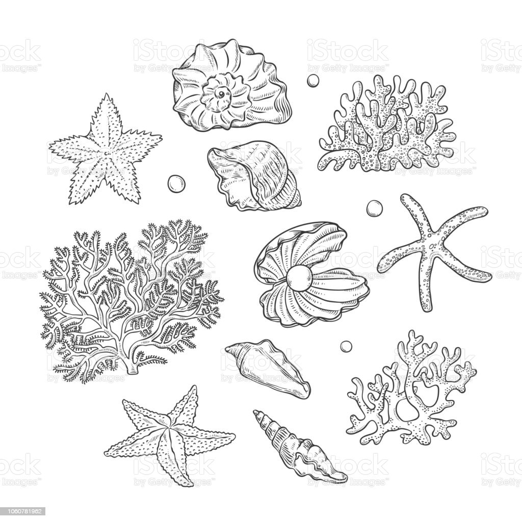 Vector set sea shells stars corals and pearls different shapes. Clamshells starfishes polyps monochrome black outline sketch illustration on white background for design marine tourist cards logos. vector art illustration