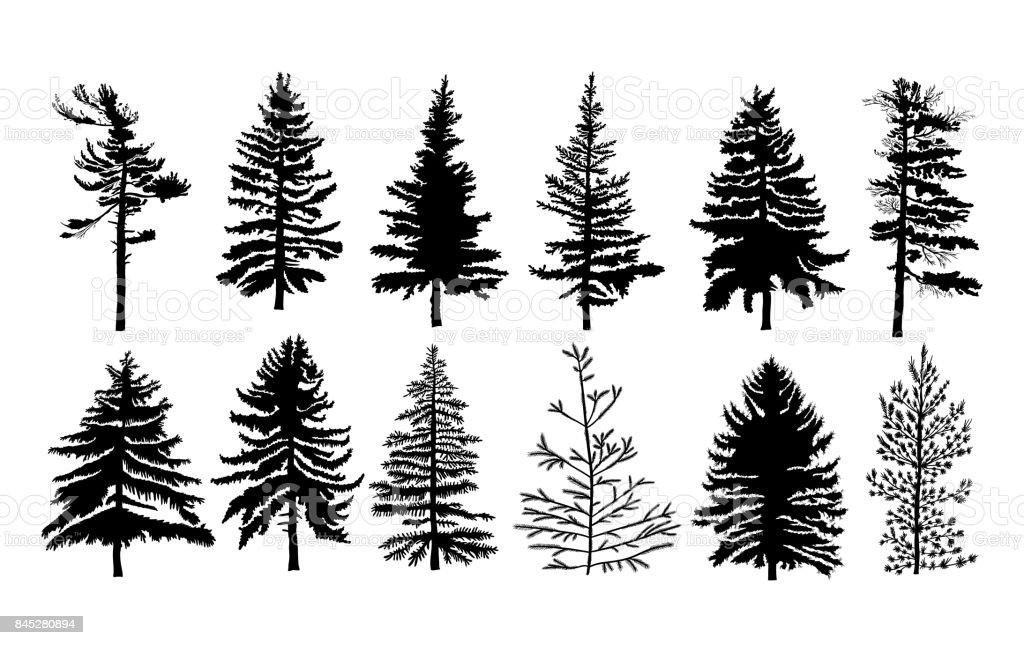 Vector Set Silhouette Of Different Canadian Pine Trees
