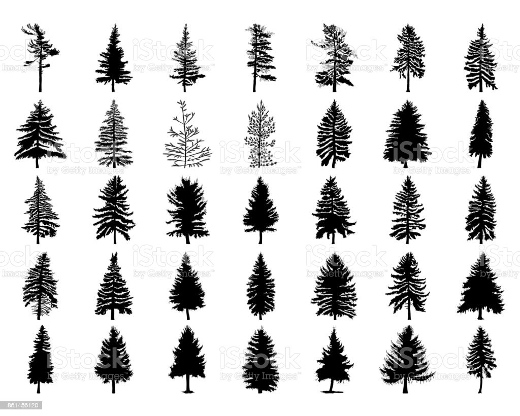 Vector Set Silhouette Of Different Canadian Pine Trees Conifer Tree Silhouettes On The White Background Collection Bundle Of Trees Stock Illustration Download Image Now Istock