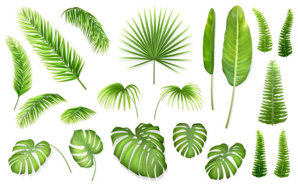 vector set tropical leaves - palm leaf stock illustrations, clip art, cartoons, & icons
