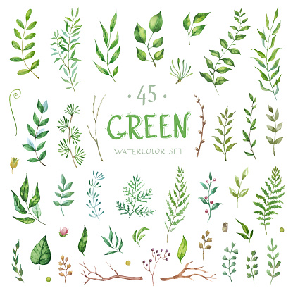 Vector Set watercolor elements. Collection garden and branches. Illustration isolated on white background.