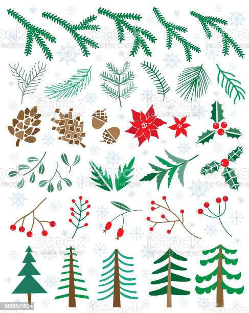 Vector set winter flowers plants berries pinecones christmas floral vector id886051694?b=1&k=6&m=886051694&s=612x612&h=tjtlqolmfyov6 k4paqz9xokhscwhhfbtxepmu7iqnc=
