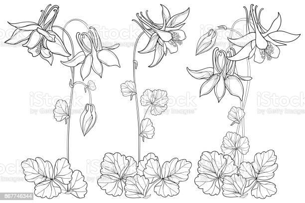 Free columbine Images, Pictures, and Royalty-Free Stock