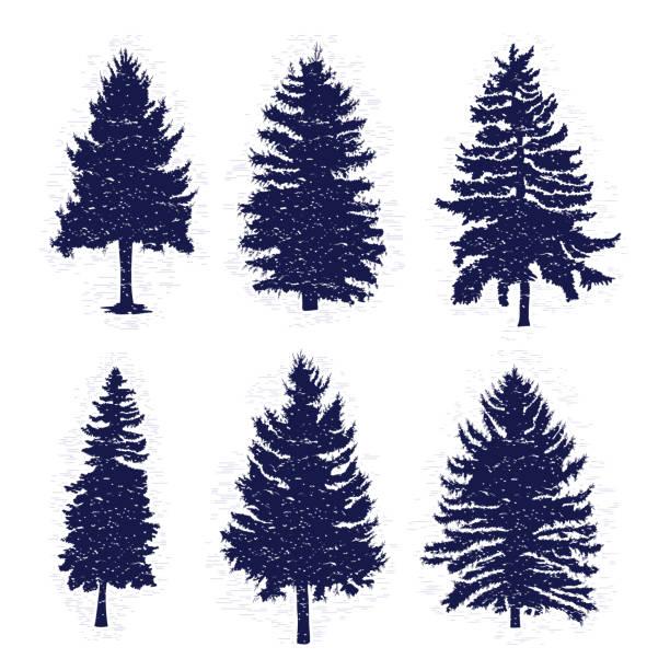bildbanksillustrationer, clip art samt tecknat material och ikoner med vektor set med pinjeträd isolerad på vit bakgrund, silhuetter av olika träslag och granar för din design, isolerade. - gran