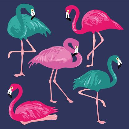 Vector set with pink flamingos. Hand Drawn illustration